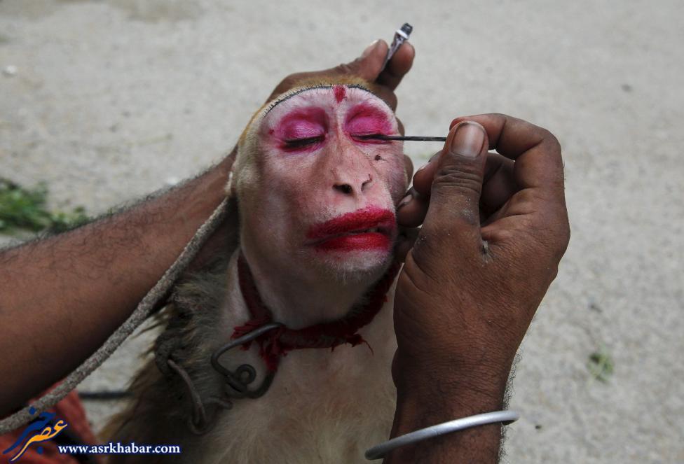 تصویر دیدنی از آرایش کردن میمون
